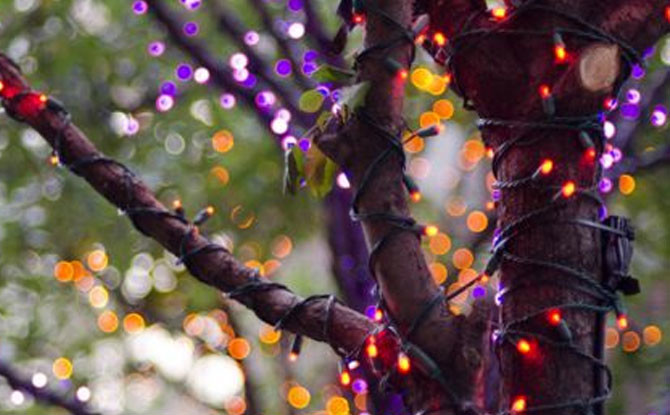 led christmas lights for halloween absolutely celebration lightingcelebration lighting - Led Christmas